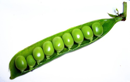 fresh pea pod by Amelia PS.
