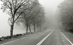 Lost in Tiorati (bikeracer) Tags: road park trees deleteme8 mist lake cold wet misty fog sepia lost drive spring savedbythedeletemegroup state interestingness1 lakes foggy 7 saveme10 seven harriman topv11111 nebbia topf250 interestingness9 moist tiorati i500 explore13may06 mostinterestinginternal chromatoned