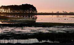 Wildlife sunrise (jimall) Tags: copyright nature sunrise yahoo google flickr wildlife assateagueisland herons egrets copyrighted jimallebach allebach 642am specnature wwwflickrcomphotosjimbachsets