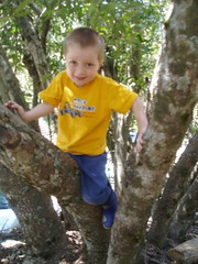 mountain trip (Liz Henry) Tags: cousins zack mountaintrip treeclimbing mountaintripbook