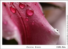 Crystal Drops... - by AP_PHOTOS