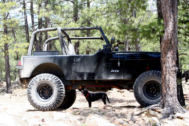 Small Dog Lifts Jeep!