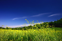Bliss (azem) Tags: flowers blue sky green field yellow clouds canon eos interestingness spring saveme6 deleteme10 deep 2006 azem fcflds