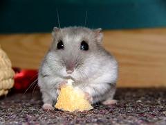 Mmmm nice piece of bread!...