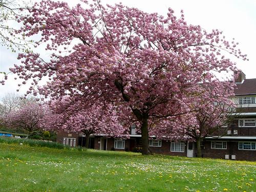 之中 春天 已經 慢慢 的 到來 了 就 在 享受 春天
