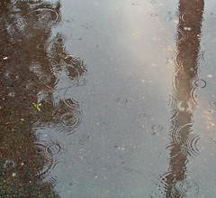 rain light reflection