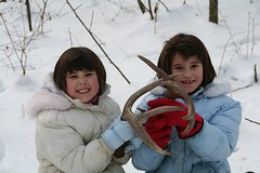 Kids Found Antler Sheddings (Hard-Rain) Tags: trees winter usa snow chicago game tree animals closeup kids forest children illinois woods hiking wildlife hunting daughters hike deer antlers rack trophy forestpreserve buck mountainbiking mammals stalk palos mammalia hunt whitetail deerhunting whitetailed odocoileus odocoileusvirginianus cervidae chordata artiodactyla 10point bullfroglake chicagoforestpreserve palosforestpreserve