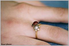 (Kunal Chokshi) Tags: hands hand poland polska ladybug thebp bsbmacro bsbjewellery