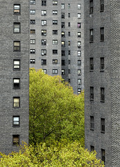 urban jungle (idogu) Tags: nyc trees urban newyork green nature 1025fav grey bricks lowereastside 2550fav jungle urbannature oneyear weeklysurvivor fragment xxxxx urbannatureblog fivestarsgallery 1show websetfavorite selectshow
