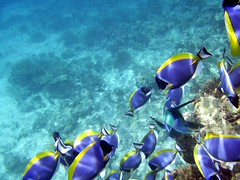 Colourful Fish (mattneighbour) Tags: ocean fish digital paradise honeymoon underwater indianocean diving snorkelling maldives digicam compact