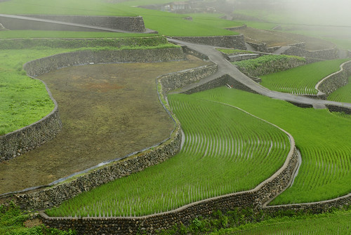japanese terraced fields