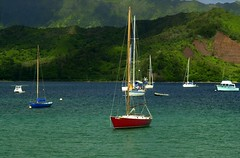 Hanalei Bay (ONE/MILLION) Tags: pictures ocean travel flowers light vacation cactus people plants mountains cute london love nature water colors animals tattoo cowboys landscape boats outdoors zoo hawaii bay photo interestingness search hit interesting rust funny colorful flickr shadows antique wildlife blossoms rusty favorites tags flags best explore kauai sail unusual variety blooms find sets lawenforcement hanalei journalism eyecatcher hanaleibay onemillion williestark