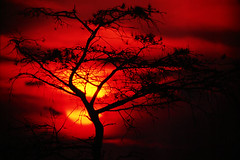 bloody sunset (Ozyman) Tags: sunset red sun tree topf25 silhouette landscape nationalpark topf50 scenery interestingness1 topf100 lonetree atree onetree bronly