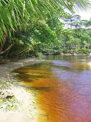 Creek @ Manzanillo