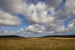 Below the Clouds... Below the Sky... (PurpleGecko) Tags: sky field clouds germany purple felder himmel wolken sigma gecko rgen foveon sd9 x3f sigmasd9 jasmund purplegecko sigma204028ex