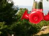Oops! (Rachel Pennington) Tags: red georgia hummingbird feeder rachelpennington almostmissedit