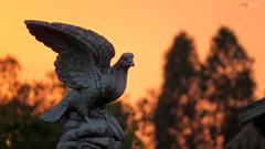 Aguila de Piedra (Alberto Jiménez Rey) Tags: sunset bird sol de hawk alberto rey campo pajaro puesta estatua aguila piedra jimenez albjr albjr7 alylu