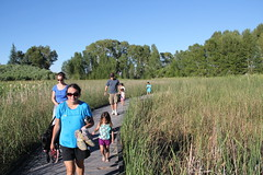 Everyone coming down the boardwalk (Aggiewelshes) Tags: hiking july lisa victor boardwalk olsen cailin bearlake gardencity jovie 2015 jalila gardencitypark