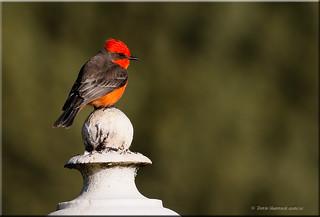 'one good bird' ~ Explored