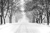 Road thru Winter. (Bernie Kasper) Tags: art berniekasper d600 effect family bigoaksnwr hiking jeffersoncounty landscape light madisonindiana madison nature nikon naturephotography new bw outdoors outdoor old outside travel tree trees trail photography park