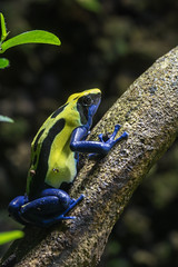 Colorful (finor) Tags: sony alpha a6500 ilce6500 frog colors yellow blue zookarlsruhe sel90m28g