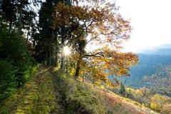 Black Forest sunset (sigi-sunshine) Tags: schwarzwald blackforest sonnenuntergang sunset wandern wanderung hiking wanderweg path trail sonne sun sonnig berge mountains germany deutschland badenwürttemberg badenwuerttemberg herbst otono autumn forbach