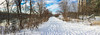 Rideau River Trail in winter time (lezumbalaberenjena) Tags: winter hiver invierno frio cold froid nieve niege snow white blanco blanca blanc blanche ottawa rideau river trail 2016 december diciembre decembre dog perro chien chiot boston terrier bully