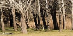 _MOR6343.jpg (LSLeave-Pictures) Tags: canberrainthewinter2015 latham australiancapitalterritory australia au