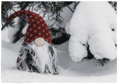 Greybeard (kaffealskare) Tags: fotosöndag fotosondag fs170115 tomte santaclaus winter snow vinter snö old grey gammal grå
