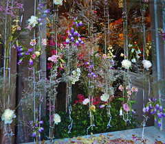 flying flowers  (explored 02/09/2017) (christikren) Tags: flowers blumen shop zürich swiss schweiz deko decoration window travel christikren bunt farbig
