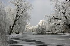 winter wonderland (hjvandervegt) Tags: 2017 nederland netherlands holland kampen overijssel winter landschap landscape snow sneeuw wit white