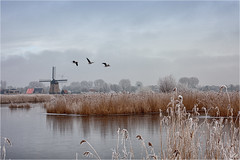 Nature in winter, Holland (Hetty S.) Tags: nature winter holland water birds mill reed oudorp sky ice hs hetty hettys canon eos landscape