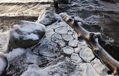 Pancake Ice ..x (Lisa@Lethen) Tags: pancake ice weather nature freezing cold water log rocks loch rare phenomenon