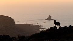 the boss (www.carbonat380.de) Tags: crete fz1000 greece kreta lumix panasonic ziege bridge cliffs goat mediterrean sea sundawn travelphotography water