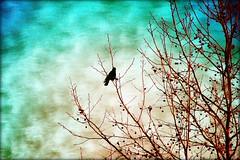 Silhouette of a Hawk... (Patlees) Tags: hawk tree winter painterly nc
