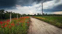Pipacs utca (janostitkos) Tags: red cloud clouds cloudy poppies utca debrecen pipacs clo piros felhős borús debrece