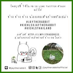 เล่นเกม #ช่วยต่ายตามหาช้าง กันค่ะ ง่ายมั๊กๆ  โพสรูปช้างที่ FB IG Twitter LINE Timeline ของตัวเองแล้วใส่   #ช้างช้างช้างน้องเคยเห็นช้างหรือเปล่า #JAYTHERABBIT  #kiehlsxjaytherabbit  #kiehlsthailand  ใส่ให้ครบนะคะ  ก๊อปไปแปะเลยก็ได้ง่ายดีค่ะ หรือจะบรรยายอะไ
