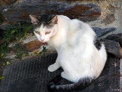 kitty (andieblacksmile) Tags: pueblo gato verano animales calor