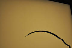 31 BIENAL INTERNACIONAL DE ARTE DE SO PAULO - COISAS QUE NO EXISTEM - 2014-  (162) (ALEXANDRE SAMPAIO) Tags: arquitetura brasil cores arte sopaulo natureza paz vida contraste ibirapuera beleza prdio formas cor fantstico cultura desenho pensar espao vivo bienal mgico comunicao criao exposio edifcio energia magia iluminao composio multiplicidade criatividade alternativo estrutura tradio imaginao reflexo repensar vertentes descoberta esttica delicadeza sensibilidade informao diversidade invisvel possibilidades bienaldearte visvel transcendncia alexandresampaio
