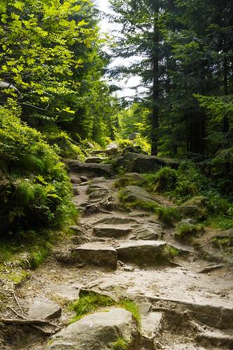 Sentier vers le Donon à Grandfontaine