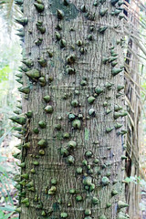"...""La Selva"" Amazonia Peru (geolis06) Tags: geolis06 pérou peru perú amériquedusud southamerica ríomanu amazonie amazonia rainforest jungle forêt forest selva madrededios biospherereserve manu parcnationaldemanú manúnationalpark 2016 patrimoinemondial unesco unescoworldheritage unescosite pantiacollatour plant plante fleuramazonie em5olympus olympusm1240mmf28"