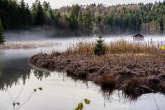 Mystic Island (*Capture the Moment*) Tags: 2016 autumn bavaria bayern deutschland germany hackensee herbst lakehackensee sonya7m2 sonya7mii sonya7mark2 sonya7ii zeissbatis1885