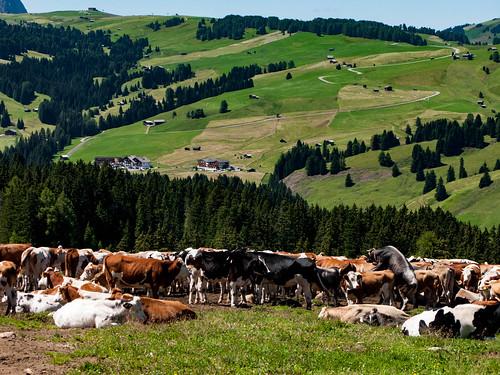 Santa Cristina Val Gardena - Il Sentiero del pastore (Trekking)