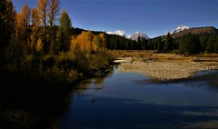 Backwater (The VIKINGS are Coming!) Tags: tetons mountains trout river snakeriver fall foliage autumn colors deer bare eagles