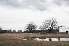 The Forks of Cypress (derekbruff) Tags: alabama florence forksofcyrpress columns farm landscape plantation ruins rural