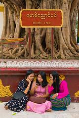 Under the Bodhi tree (yuriye) Tags: yuriye myanmar yangon bodhi tree budda girl group friends fun mobile shvedagon shwe asia ngc buddism enlightenment sacred