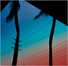 Night Music (Patricia Colleen) Tags: palm trees maui palmtrees fromthekahuluistarbucks sunset hawaii