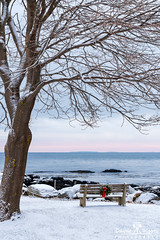 Peaceful Morning in the Park, Great Island Common, New Castle, New Hampshire (DawnaMoorePhotography) Tags: baretree blue newcastle newengland newhampshire photography relaxation serene winter bench brown christmaswreath coast coastal coastline dawnamoorephotography dawnamoorephotographycom greatislandcommon greatislandcommonpark image landscape nh ocean park parkbench peace peaceful photo photograph picture pink portsmouth red relaxing rock rocks sea seascape serenity snow travel tree white winterscene wreath unitedstates us