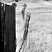 Fenceline in B&W