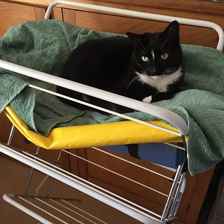We must be the only house hold who keep the clothes horse out, so the cat can use it! #badger #cat #feline #splock #aberdeen #offshore #bag #clothes #horse #towel #house #black #white